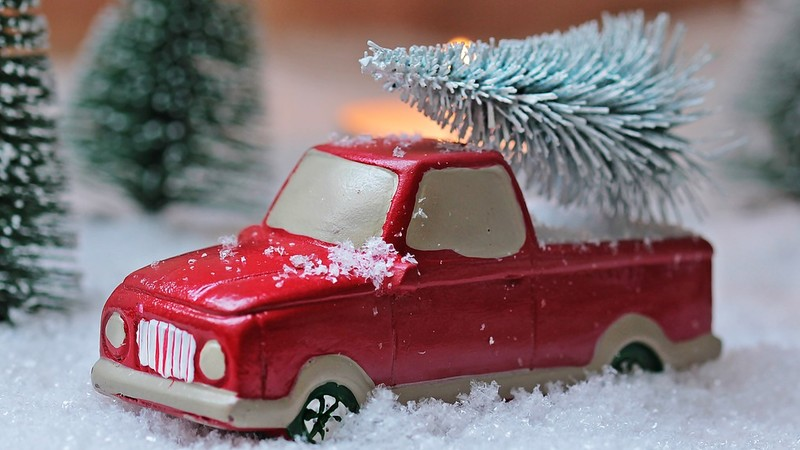 Christmas tree loaded on pickup truck